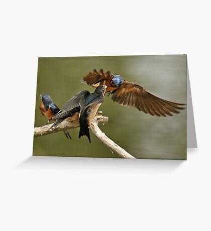 Feeding Swallows Greeting Card