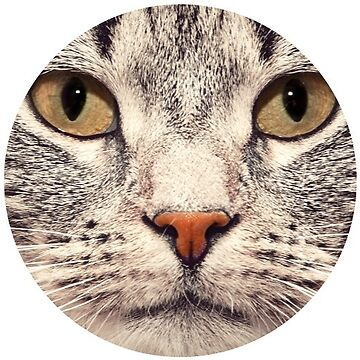 Cat Face by TeeVision