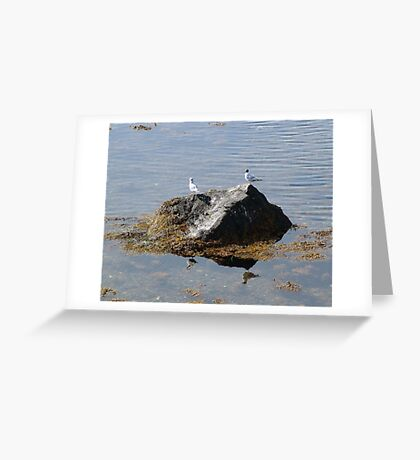 Gulls On A Rock Greeting Card