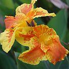 Tiger Lily by BellaStarr