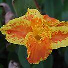 Golden Lily by BellaStarr
