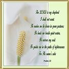 Psalm 23 by picketty