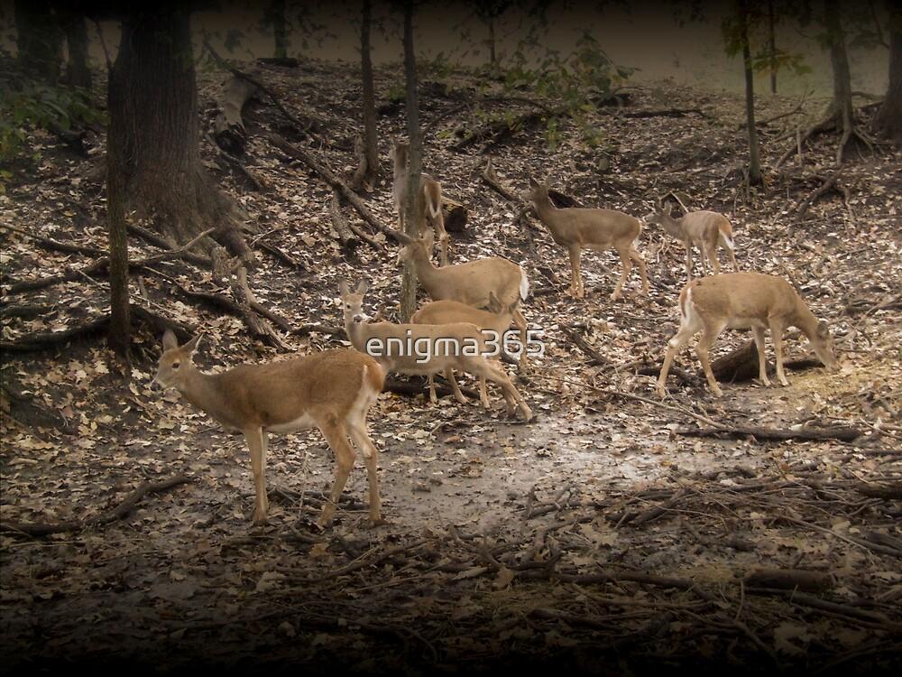 Deer Crossing by enigma365