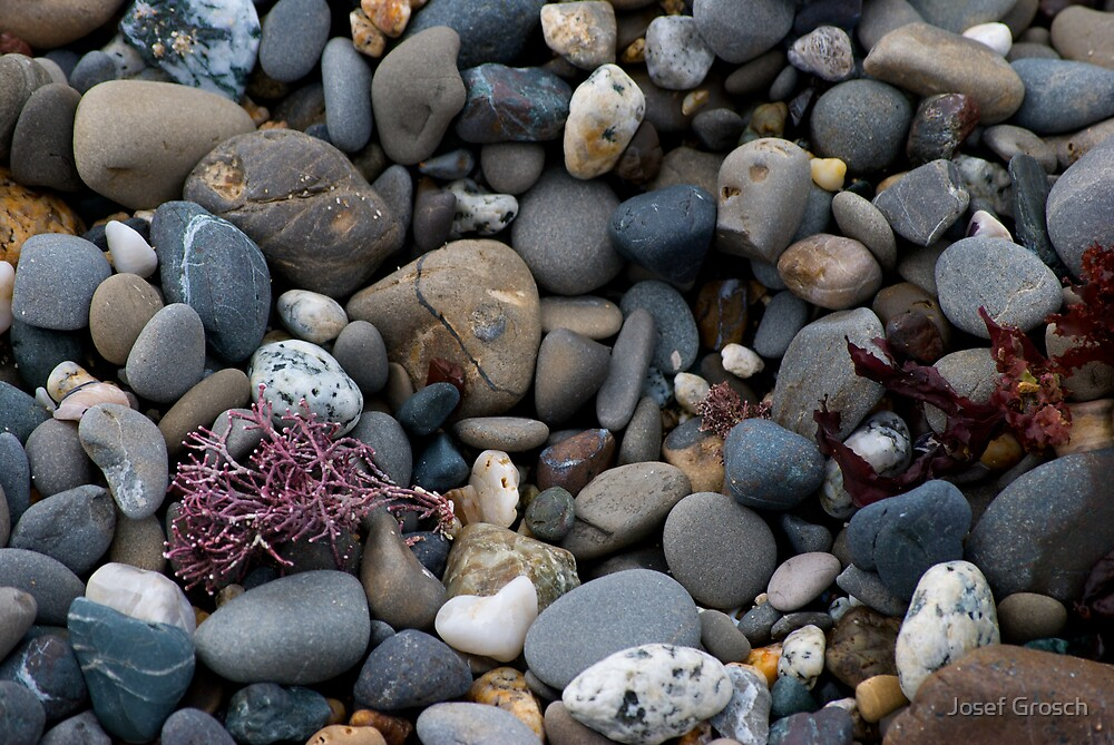 Moss Beach Pebbles by Josef Grosch
