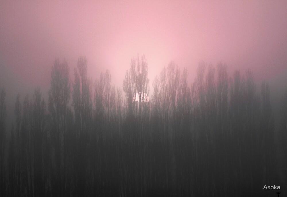 Rose Dawn by Asoka