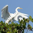 The Egret Has Landed by Todd Weeks