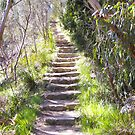 Stone Steps by Amanda Hunt