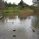 Duck Pond by Amanda Hunt
