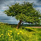 The One Tree, Port Meadow, Oxford by ColinKemp