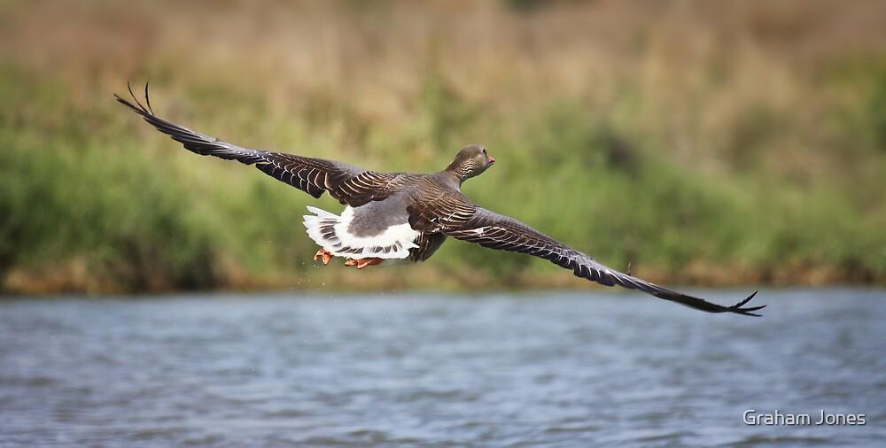 Full Flight by Graham Jones