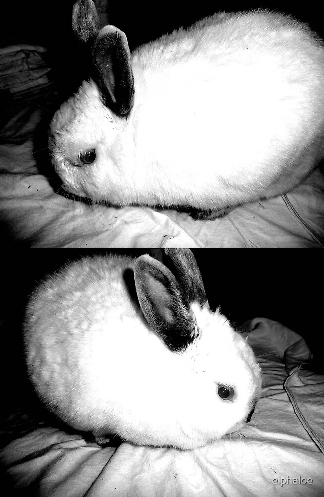 Rabbit by elphaloe