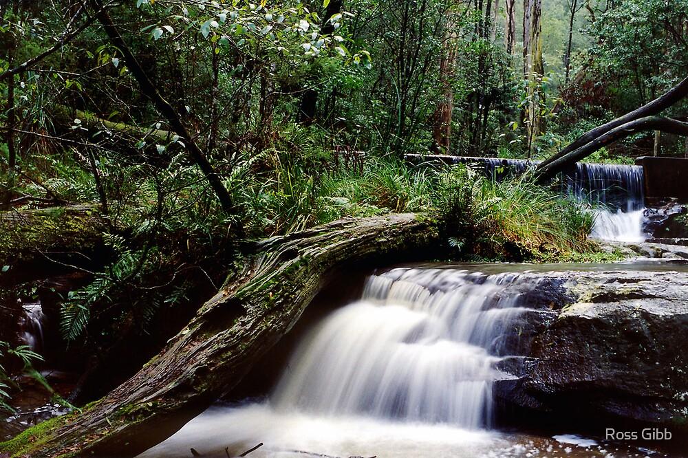Yea River Kinglake National Park by Ross Gibb
