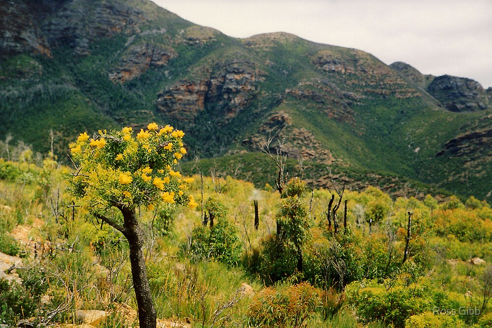 McDonnell Ranges National Park by Ross Gibb