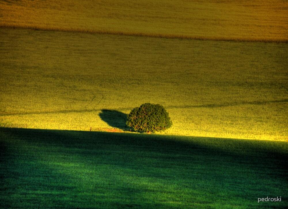 Canola & Oats on dusk by pedroski
