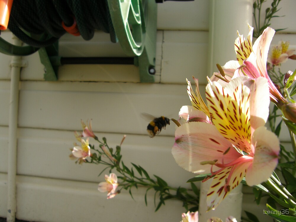 Fuzzy Bee 2 by Lenny36