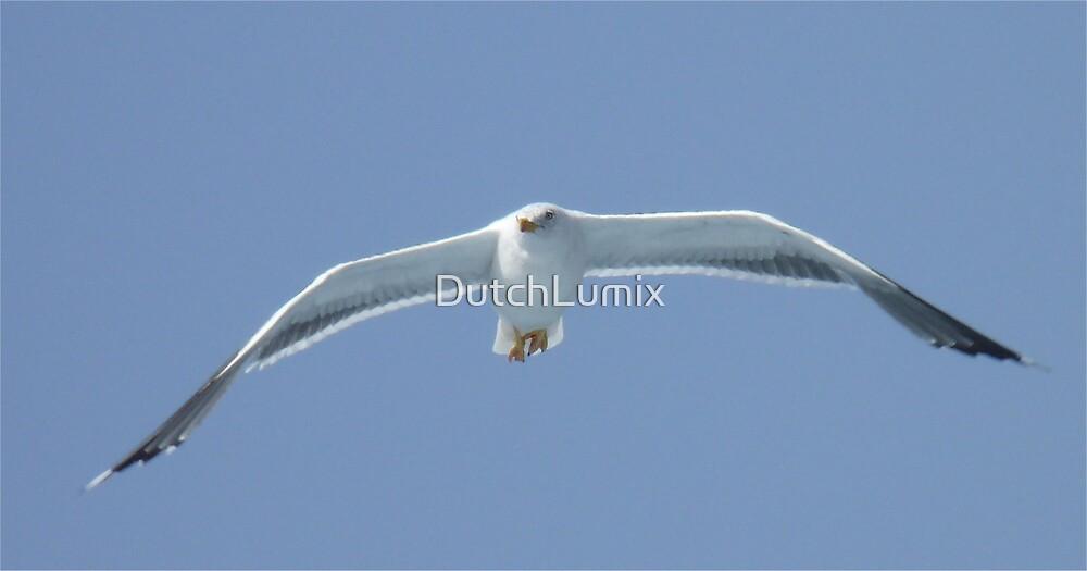 Seagull-1 by DutchLumix