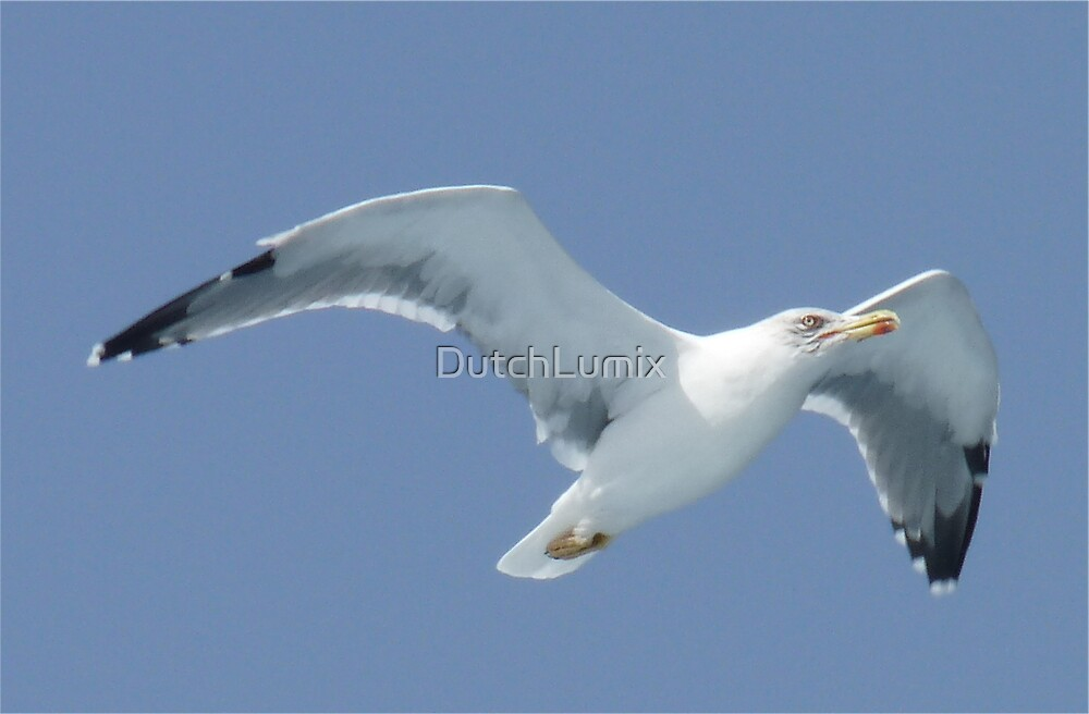 Seagull-3 by DutchLumix
