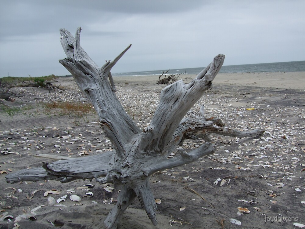 Driftwood by jaydgittens