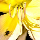 Lilly & Fly by John Thurgood