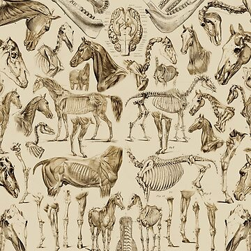 Horse Anatomy (tan print) by adamcampen