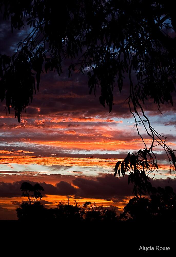 Sunset by Alycia Rowe
