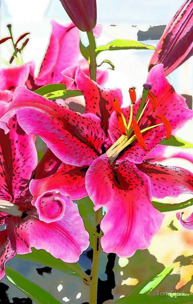 Flower series #1 by Tom Clark