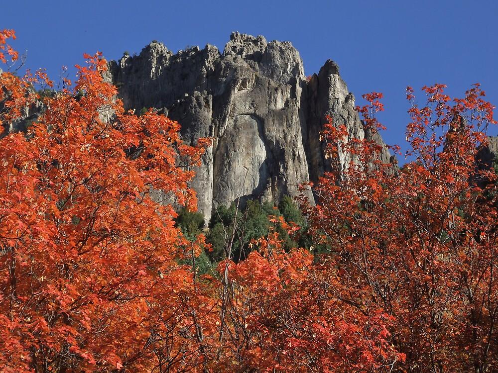 Logan Canyon Fall 2009 by photoop