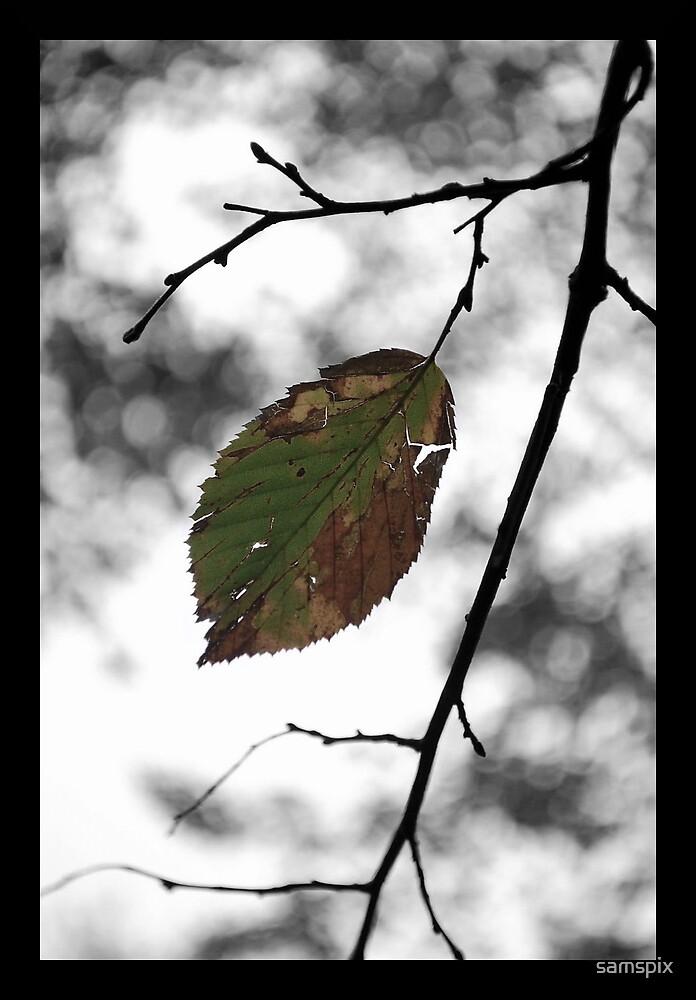 Remembrance of a Season by samspix