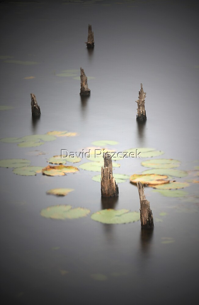 Lost In A Daydream by David Piszczek