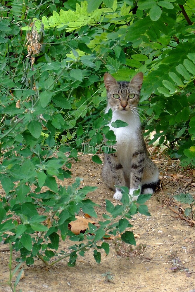 Are you lost? (The cat asked) by Themis
