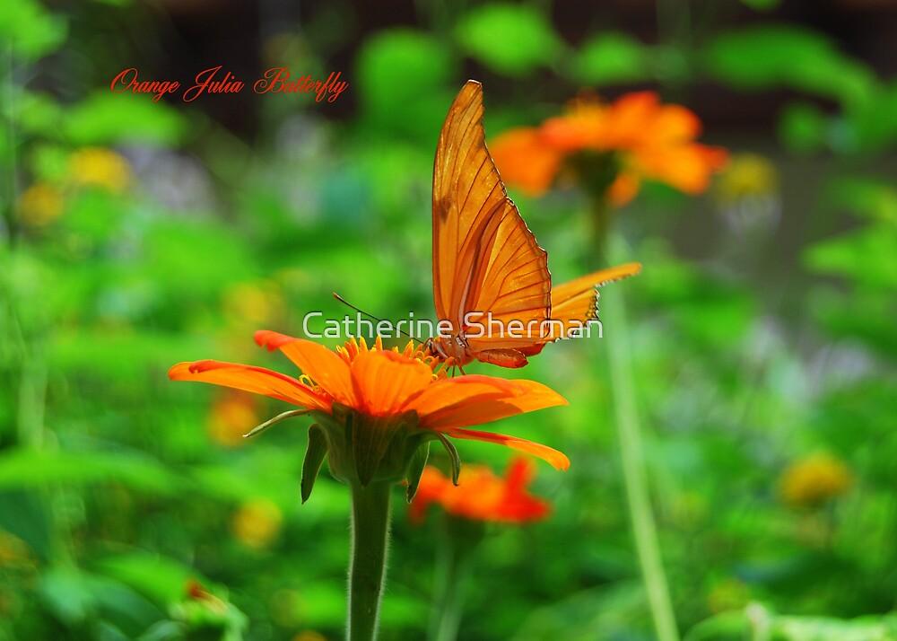Orange Julia Butterfly by Catherine Sherman