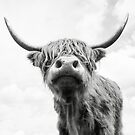 Highland Cow in Black and white by Alex Sharp