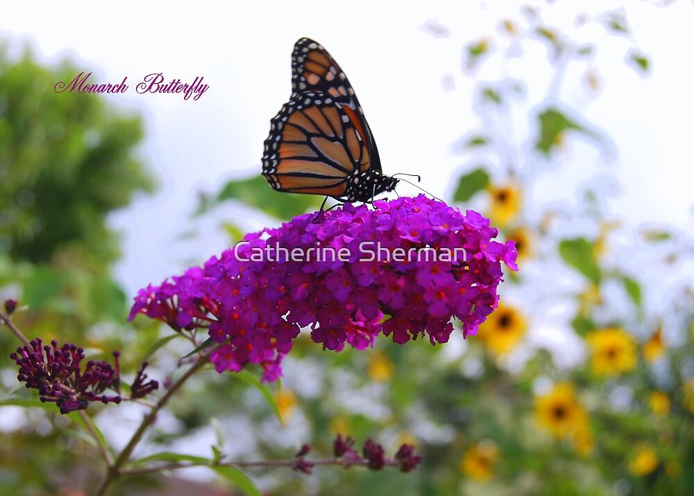 Monarch Butterfly on a Butterfly Bush by Catherine Sherman