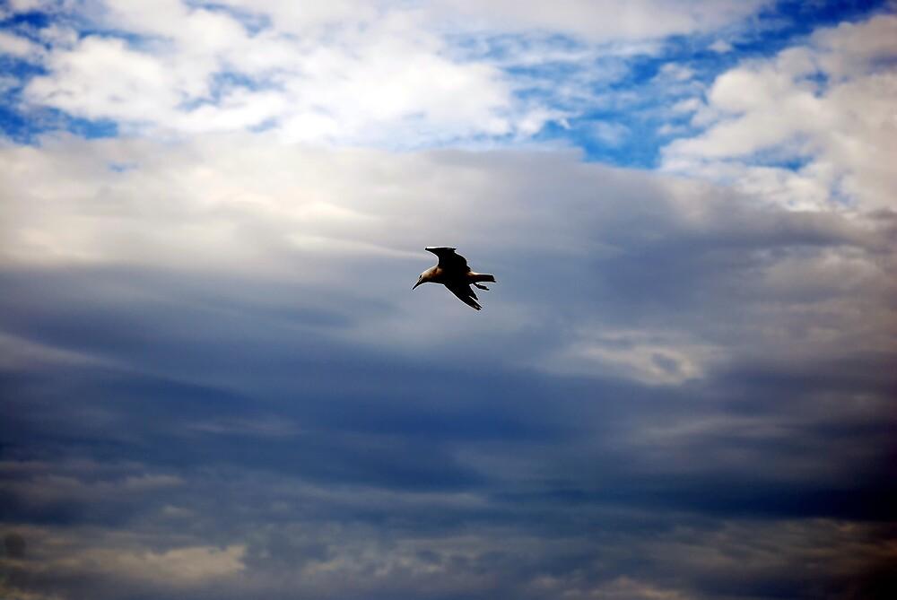 johnathon livingstone seagull? by bobbyverrills