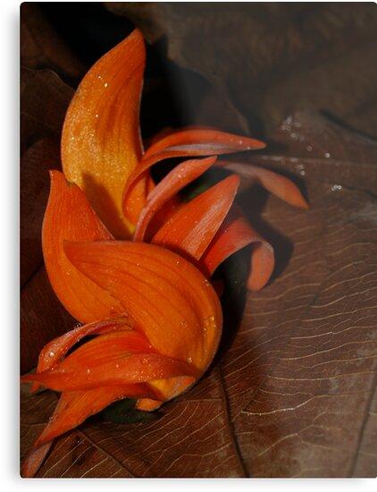 Orange Dance by leoaloha