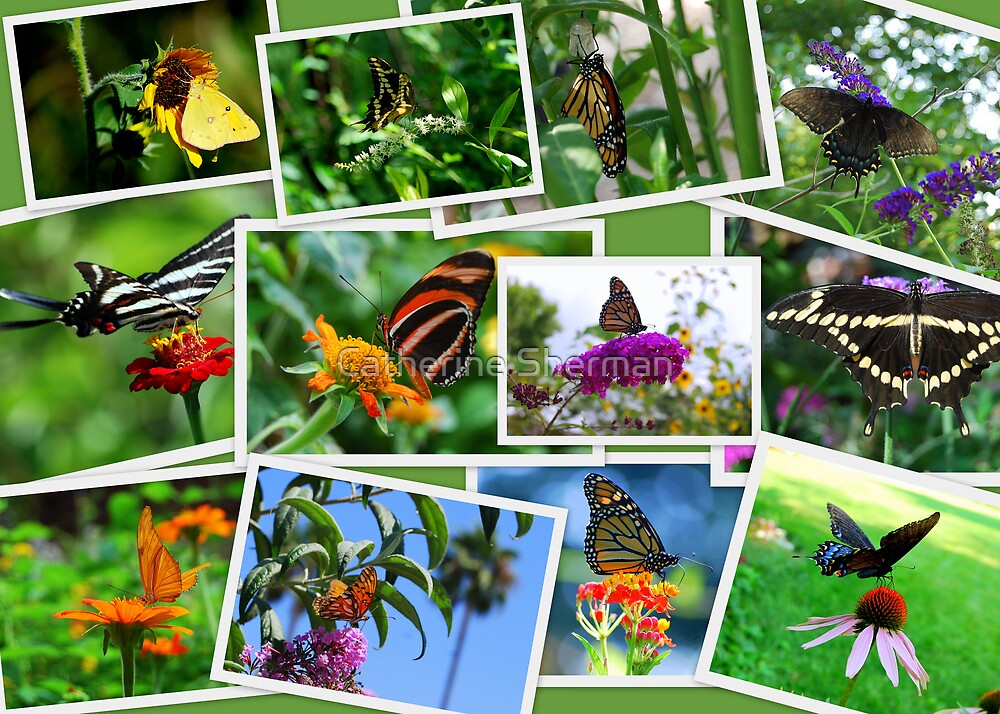 Butterfly Collage by Catherine Sherman
