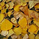 Fallen Leaves by Bellavista2