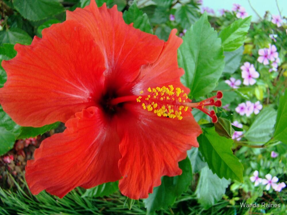 Hibiscus by Wanda Raines