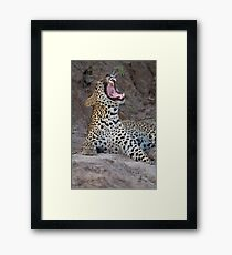 Teeth of the leopard Framed Print