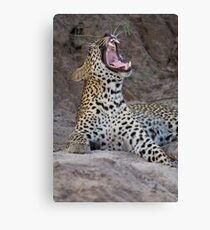 Teeth of the leopard Canvas Print