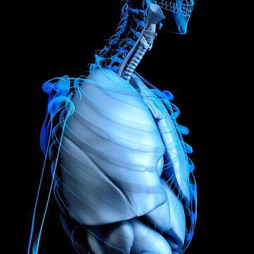 X-Ray Anatomy by realmatdesign