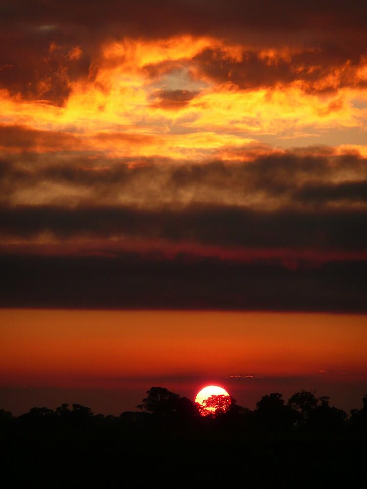 Sunset on fire. by Carole Stevens