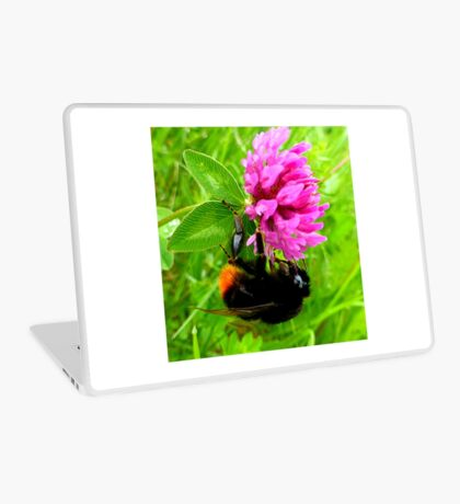 Bumblebee on red clover Laptop Skin