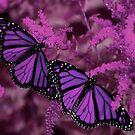 Purple Passion by Linda Miller Gesualdo