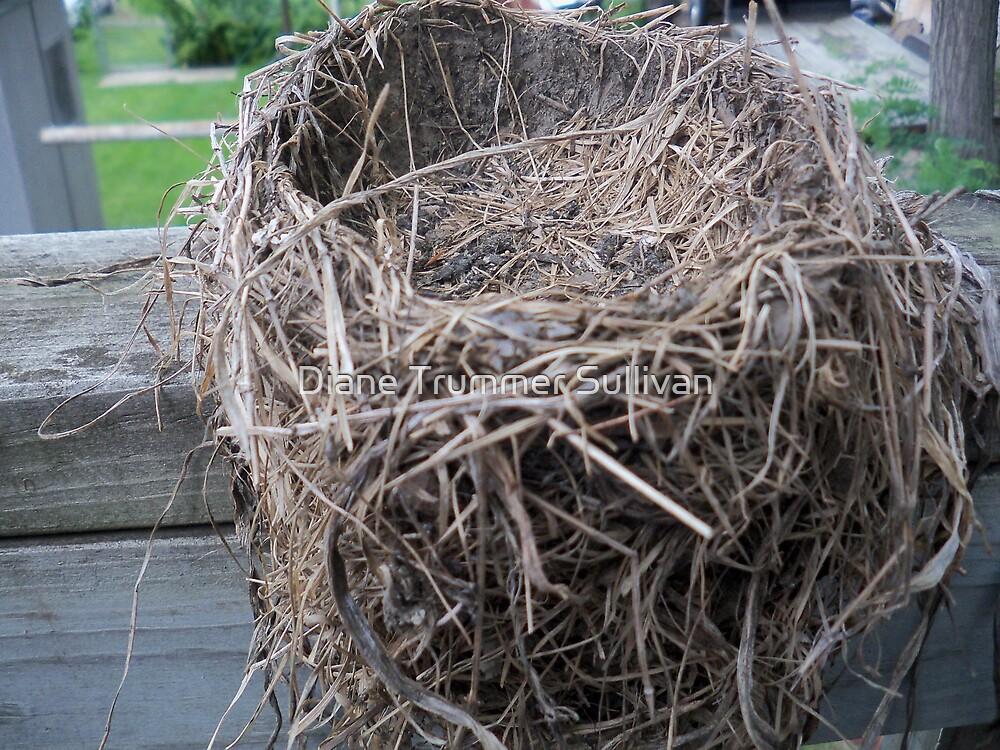 Empty Nest by Diane Trummer Sullivan