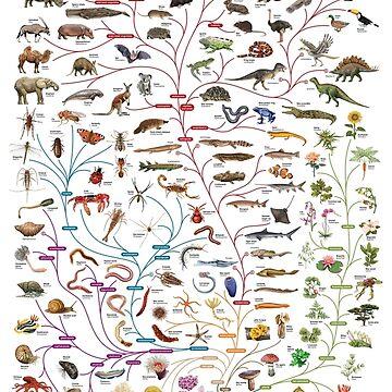 Darwinian Evolution Tree of Life by ThisOnAShirt