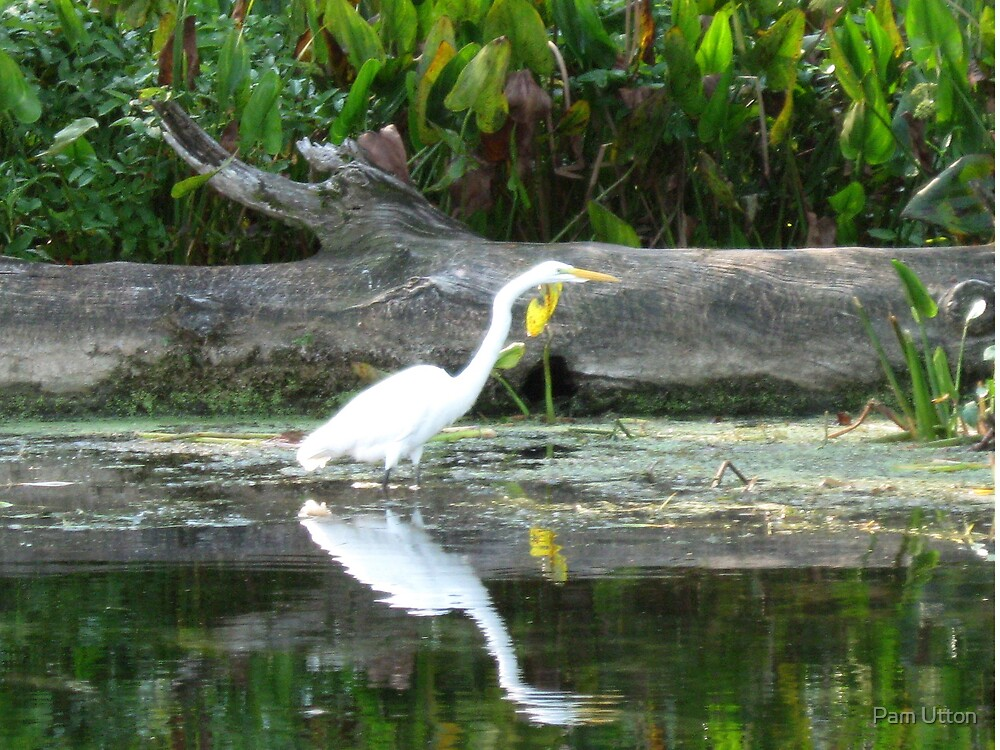reflections - Egret by Pam Utton