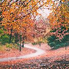 Autumn Forest Path in Brooklyn New York City by Vivienne Gucwa