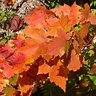 Maple Leaves by George Cousins