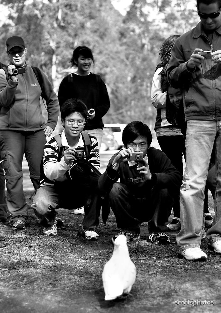 The paparazzi by scottsphotos